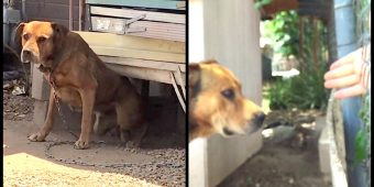 Owner Refused To Unchain 'Vicious' Dog For 10-Years And A Neighbor Decided To Break Him Free