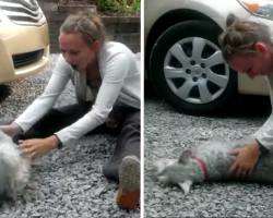 Dog So Excited To See Owner After Two Years, He Passes Out On The Spot