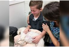 "Young Boy Comforts His Dying Dog: ""I Want To Hold Her When She Goes To Heaven"""