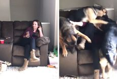 Soldier Returns Home To Her Dogs After 6-Months And They 'Lost It'