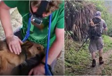 No One Would Help Dying Dog In Remote Mountain Village So They Took Over
