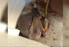 "Woman Thought She Found A Homeless 'Dog' On Her Porch, When It ""Wasn't A Dog"" At All"