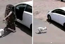 Woman Throws Disabled Dog Out Of Car, Kicks Him Face-First Into The Ground