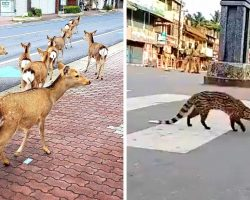 Wild Animals Start Roaming Quarantined Cities As People Lock Themselves Indoors