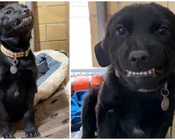 Shelter Puppy Flashes Iconic Toothy Grin Whenever Anyone Sweet-Talks Him