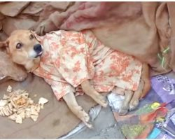 Woman Couldn't Pay For Stray's Medical Care, She Dressed Him & Gave Him Her Dinner