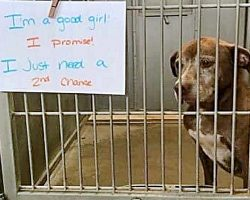 Shelter Dog's Been Waiting 7 Years To Be Adopted: 'I Just Need A 2nd Chance'