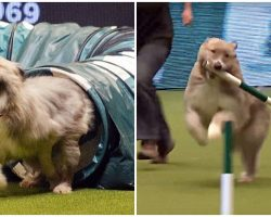 Kooky Rescue Pup Breaks All The Rules At Agility Competition & Steals The Show