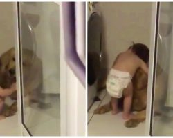 Diapered Toddler Comforts Frightened Golden Retriever During Thunderstorm
