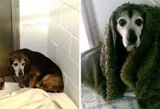 After 764 Days Apart, Dad Wonders If Missing Senior Dog Will Recognize Him Again