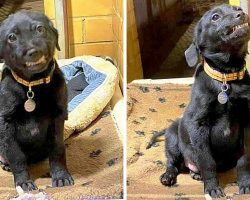 Shelter Pup Keeps Getting Rejected, Starts Smiling At Adopters To Win Them Over