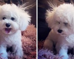 "Dog Has Bad Hair Day & Looks Defeated After Mom Gives Her An ""Amateur Haircut"""