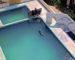 'World's Loneliest Dolphin' Dies After Spending 15 Years In Abandoned Pool