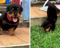 Gutsy 3-Legged Puppy Takes On Difficult Challenge To Show Mom She's A Toughie