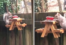 Man Builds A Mini Picnic Table For The Squirrel Visitors In His Yard