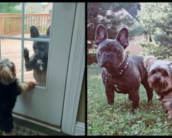 Neighbor's Dog Comes To Front Door When He Wants Our Pup To Come Out And Play