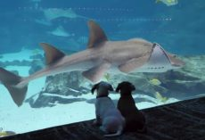 Puppies Get To Explore And Take In Sights And Sounds Of Closed-Down Aquarium
