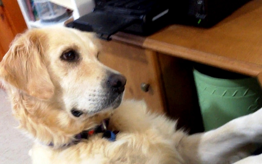 Dog Sees Puppy Crying On Video Amp She Sobs As She Tries To