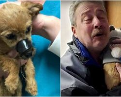 A Heartwarming Story: Puppy Finally Meets the Man Who Saved & Rescued Him