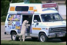 "Dog ""Loses It"" When He Hears The Ice Cream Truck & Bolts Down The Street Alone"