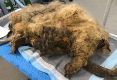 They Shaved Off Years Of Neglect & Matted Fur, Unveiling The Most Precious Face