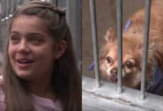 Girl Notices Old Dog At The Shelter And Walks Out To A Crowd Waiting For Her