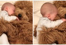 Infant Baby Falls Asleep In His Goldendoodle's Paws & The World Falls In Love