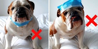 Dog Tired Of People Wearing Masks Incorrectly Makes Video To Fix Rookie Mistakes