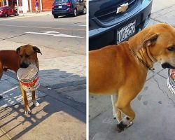 Sad Homeless Dog Thirsty For Days Finds Discarded Bucket & Begs For Some Water