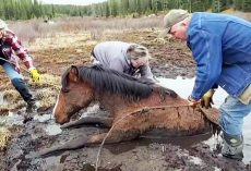 Depleted Horse Was Stuck In Mud For 5 Hours After Her Herd Left Her Behind
