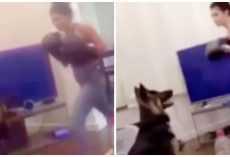 Woman Punches German Shepherd 9 Times To Head & Face With Boxing Gloves On