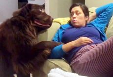 "Guilty Dog Tries To Cover Up His Crime By ""Bribing"" Mom With An Overdose Of Love"