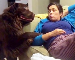 """Guilty Dog Tries To Cover Up His Crime By """"Bribing"""" Mom With An Overdose Of Love"""