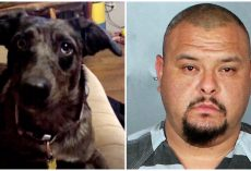 Man Sped Down Street & Onto Neighbor's Driveway To Intentionally Run Over His Dog