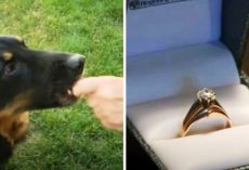 """Food Thief"" Dog Coughs Up Missing Wedding Ring That Had Disappeared 5 Yrs Ago"