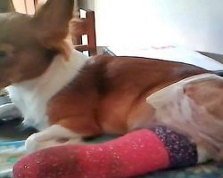 Man Is Furious After Vet Allegedly Amputated The Wrong Leg Off His Puppy