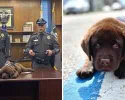 Adorable Police K-9 Puppy Sleeps Through His Entire Swearing-In Ceremony