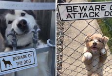 "10+ Very ""Dangerous"" Dogs Behind ""Beware Of Dog"" Signs"