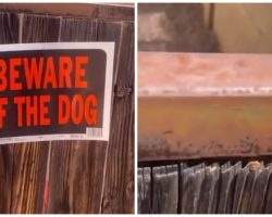 Man Decides To Peek Over Fence With Beware Of Dog Sign Posted
