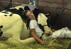 They Didn't Take The Prize Home, But A Boy And His Cow Won Over Some Hearts