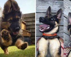 10+ Adorable German Shepherd Pics To Put A Smile On Your Face