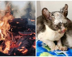 Police Find Box Of 9 Kittens Set On Fire & Rush To Free Them From Torture