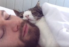 Unwanted Shelter Cat Gets A Chance, Cuddles With Rescuer In Sleeping Routine