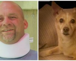 "Felon Runs Over Man & Dog Out Walking Because Guy Told Him To ""Slow Down"""