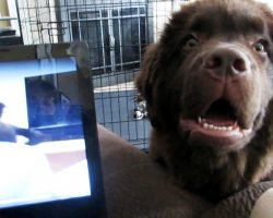 Puppy Separated From Brother At Adoption Melts On Hearing His Voice On Video