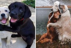 10+ Heartwarming Pics Of Dogs Hugging Their Soulmates