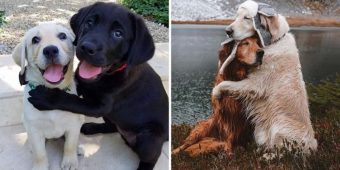 10+ Incredible Pics Of Dogs Hugging Their Soulmates That Will Melt Your Heart