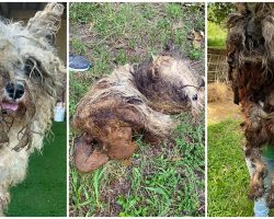 84 Dogs Soaked In Urine & Feces Were Rescued From Wire Cages At Puppy Mill