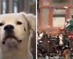 Stray Dog Becomes Big Hit In Classic Budweiser Super Bowl Commercial