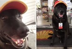Senior Dog Abandoned At Gas Station Becomes Everyone's Favorite Employee